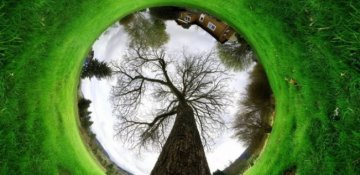 Ağac deyib keçməyin